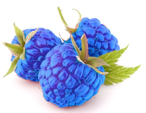 BlueRaspberry Flavor Concentrate for Frozen Yogurt