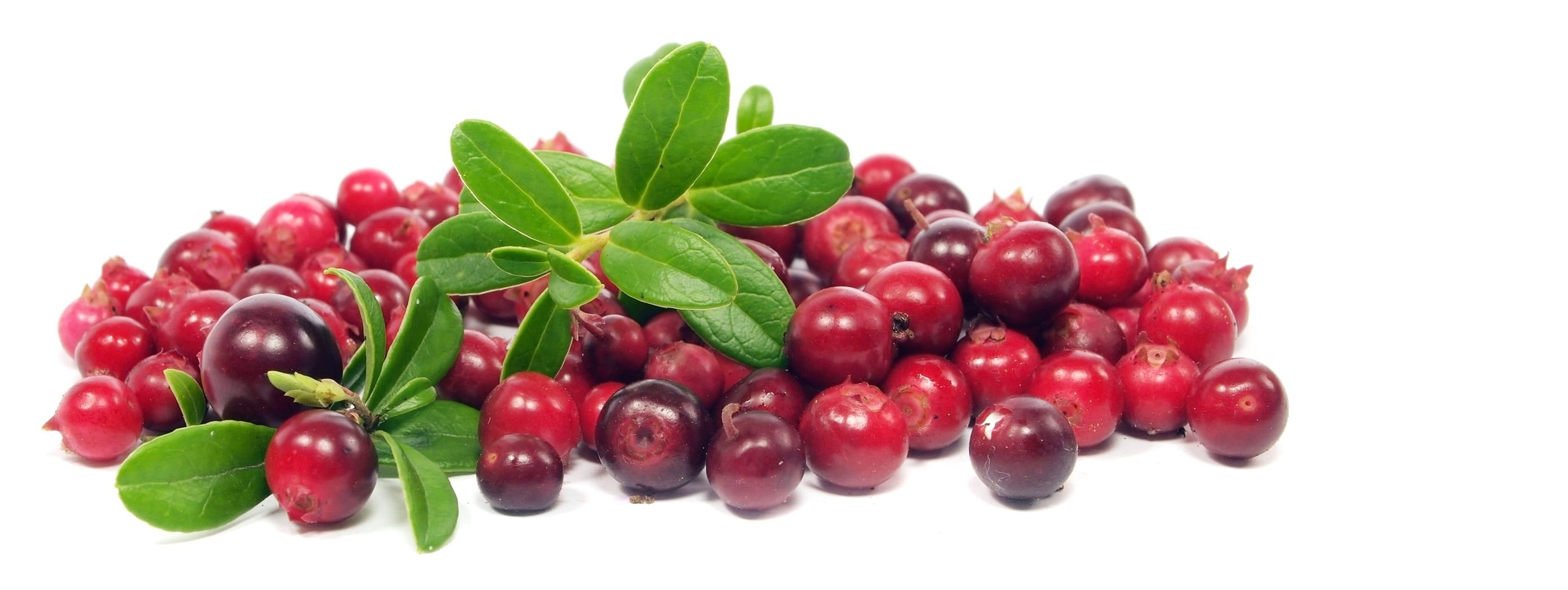 Cranberry Flavor Concentrate Frocup